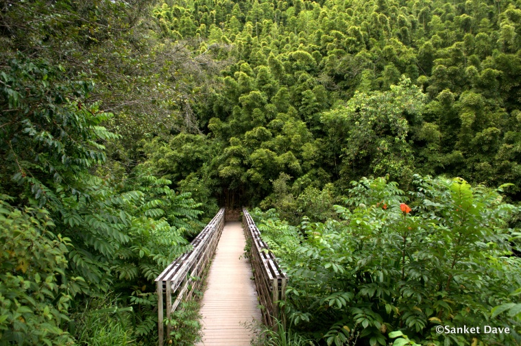 Bridge on the Pipiwai trail